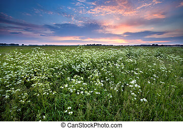 sunset over summer meadow