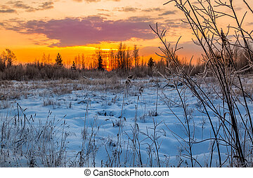 A beautiful sunset in the forest over the hoarfrost trees