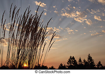 Sunset Over the Horizon in Nature Park 2 - Sunset Over the ...
