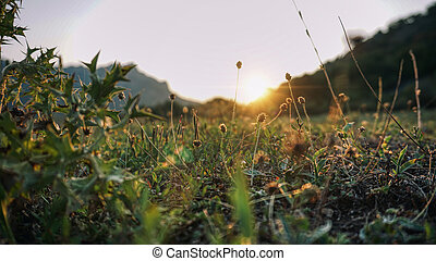 Sunset over the mountain with fields and sun rays