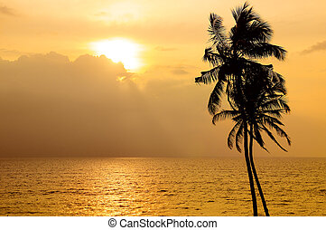Sunset over the ocean. Against the sky the dark silhouette of a coconut tree.