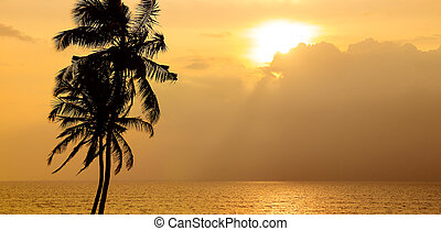 Sunset over the ocean. Against the sky the dark silhouette of a coconut tree. Wide photo