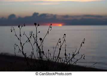 Sunset over the ocean with plants in foreground