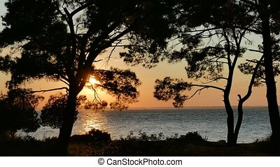 Sunset over the sea through pine trees. 4k