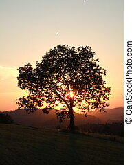Sunset over the tree