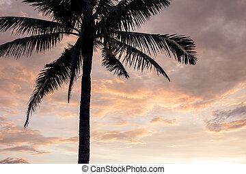 Sunset over the tropical beach.