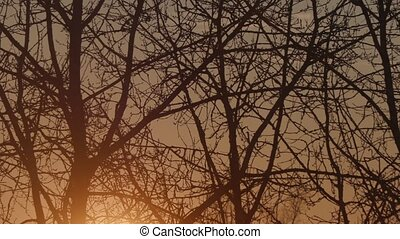sunset over tree branches.