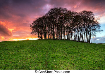 Sunset over Trees - A beautiful fiery sunset over a beech...