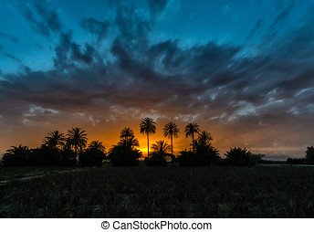Sunset over tress palm trees in Spain