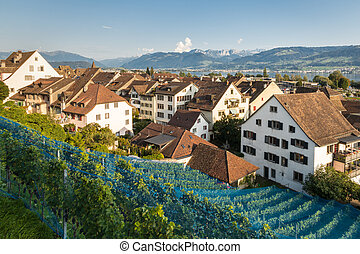 vineyard above traditional houses in Rapperswil town, canton of St Gallen, Switzerland