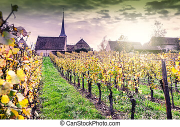 Sunset over vineyards of wine route. France, Alsace
