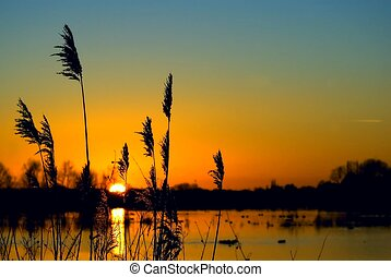sunset over wetland - colorful sunset over a wetland, with...