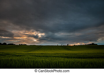 Sunset over wheat field in Scotland