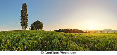 Sunset over wheat field with path and chapel in Slovakia - panorama