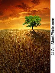 wheat fields - sunset over wheat fields