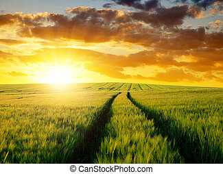 Sunset over wheat fields.