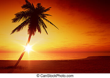 sunset palm tree