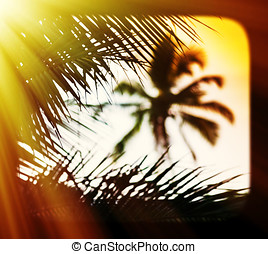Sunset palm tree blurred framed postcard background