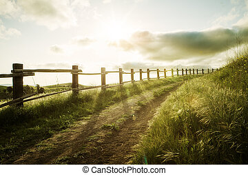 view of nice sunny summer countryside landscape during sunset
