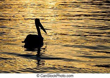 Sunset Pelican Silhouette