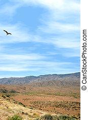 Sunset Point - Bird flying over mountainous terrain at...