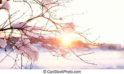 Sunset rays shine through the snowy branch, slow motion