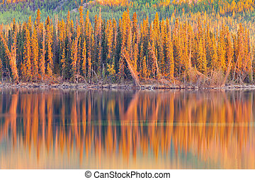 Sunset reflections on boreal forest lake in Yukon - Warm ...
