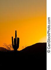 Sunset Saguaro