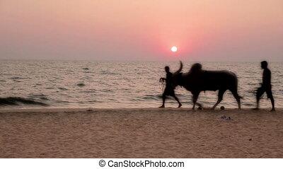 Sunset scene on beach