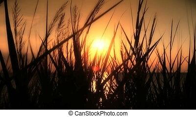 sunset sea grass