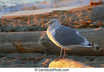 A seagull warming itself in the fall sun