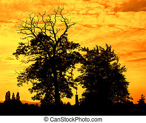 Sunset silhouette with trees