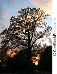 sunset silhouhette