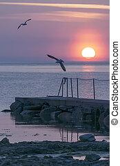 Sunset Sizzle