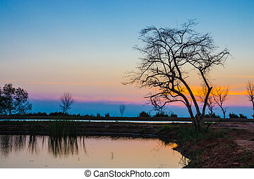 Sunset sky and dead tree at the lake.