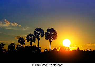 Sunset sky and palm trees silhouettes.