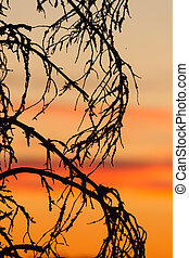 Sunset sky and tree silhouette