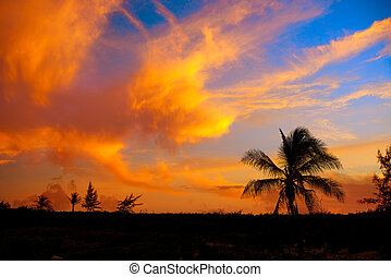 Sunset sky coconut palm trees in Caribbean