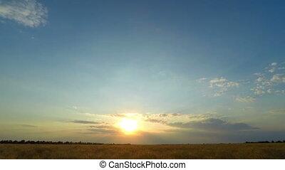 Sunset Sky over a Wheat Field