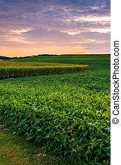 Sunset sky over farm fields in rural York County, Pennsylvania.