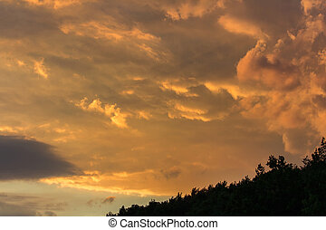 Sunset sky with trees silhouette, Czech landscape