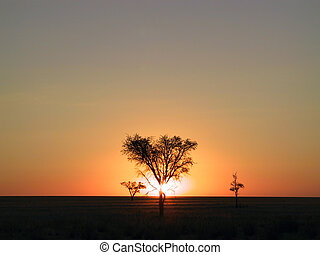 Sunset through a tree (Namibia).