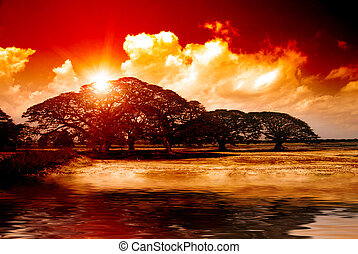 Sunset - Fantasy sunset over acacia trees reflecting in...