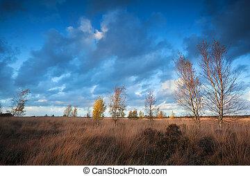 sunset sunlight over autumn marsh, Dwingelderveld, Drenthe,...
