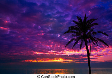 sunset sunrise palm tree over Mediterranean