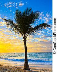 sunset the sea
