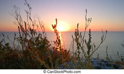 Sunset. The sun over the horizon illuminating dune grass and beach.