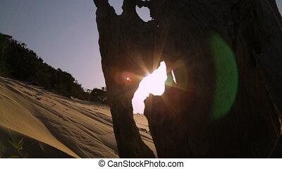Sunset Through a Dead Beach Stump, Qld Island