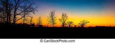 Sunset Through the Barren Trees in Late Autumn in Minnesota.