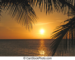 Sunset through the palm trees over the caraibe sea, Roatan ...